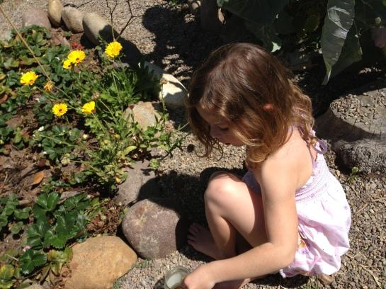 CH garden maiden