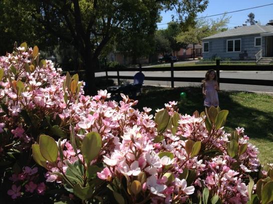 CH garden spring